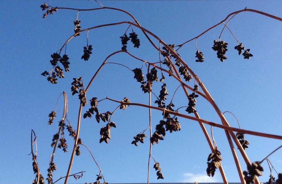 seeds_and_sky